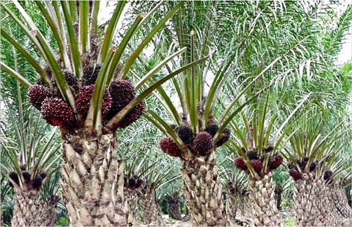 Palm oil businessman indicted for graft