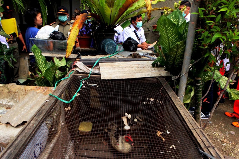 Avian Influenza Inspections