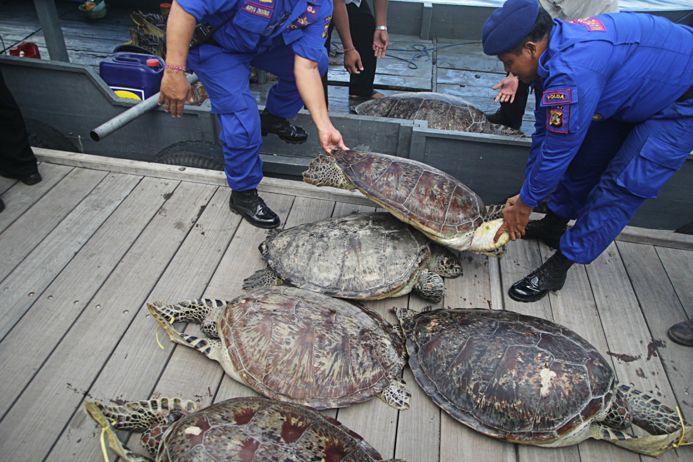 Bali Police thwart turtle smuggling attempt