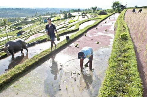 Ministry aims to provide income in rural areas with Rp 2.25t irrigation projects