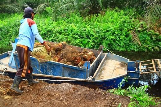 Review moratorium on oil palm plantations