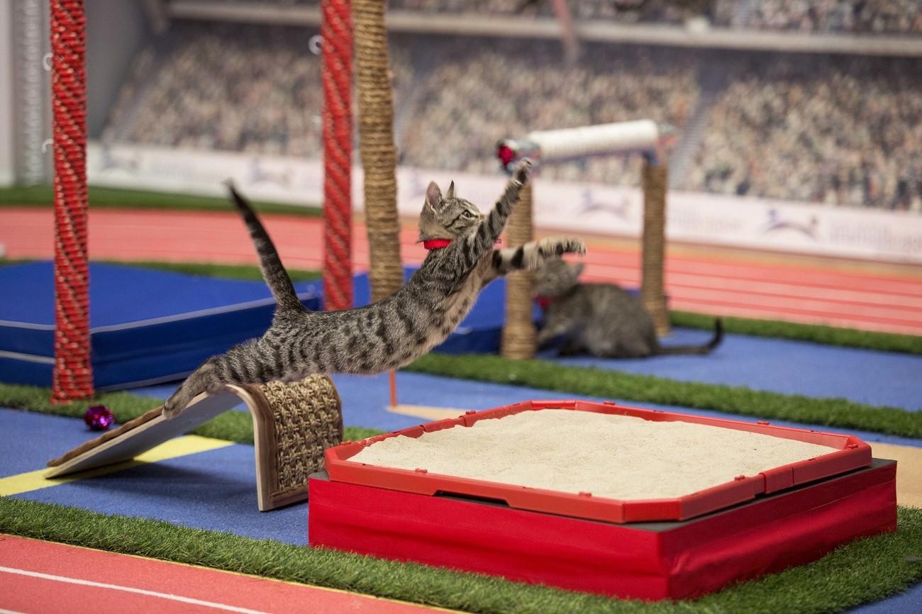Tiny paw-thletes compete in Hallmark's Kitten Summer Games