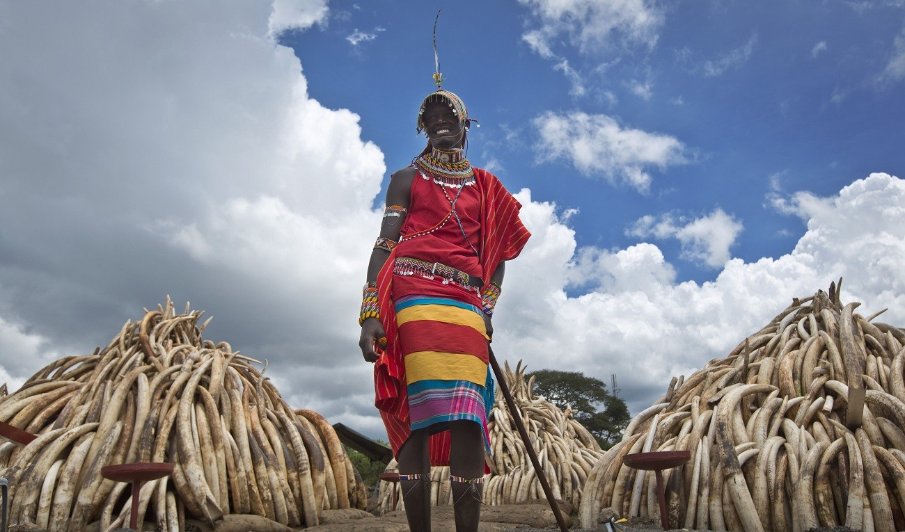 Kenya: Large pyres set up for massive burn of ivory