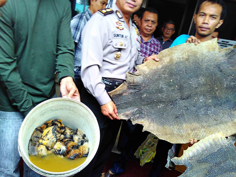 Three nabbed for hunting Sumatran tigers