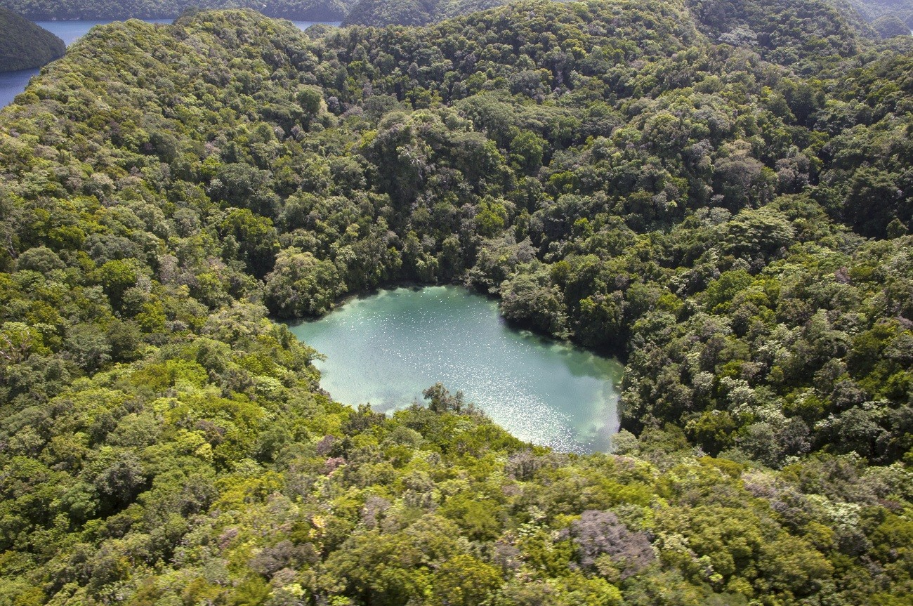 Palau changes ocean sanctuary plan to allow Japan fishing