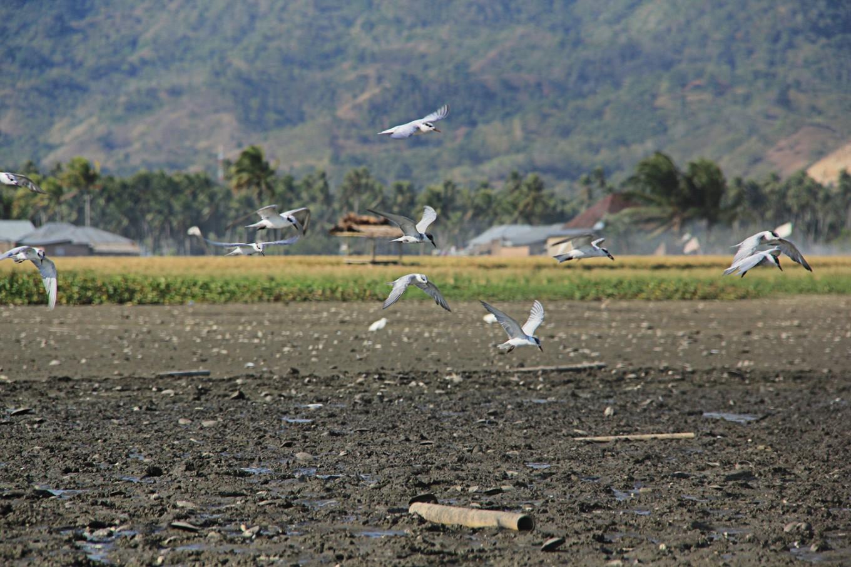 Depok lakes' revitalization urged