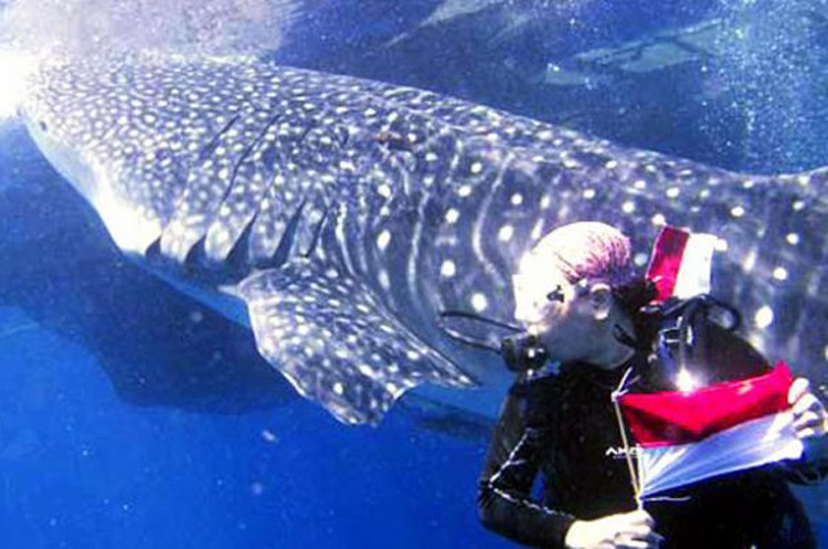 Whale sharks rescued from captivity in Maluku