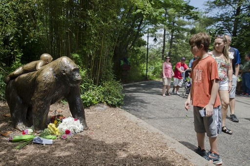 Police investigate parents of boy rescued from Harambe the gorilla