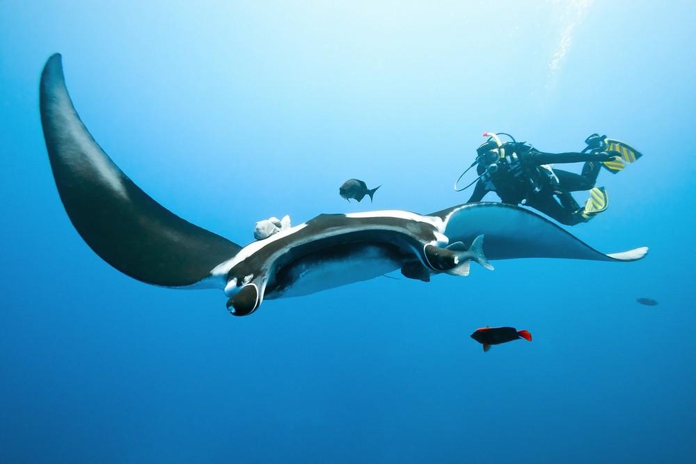 Sea marine jobs