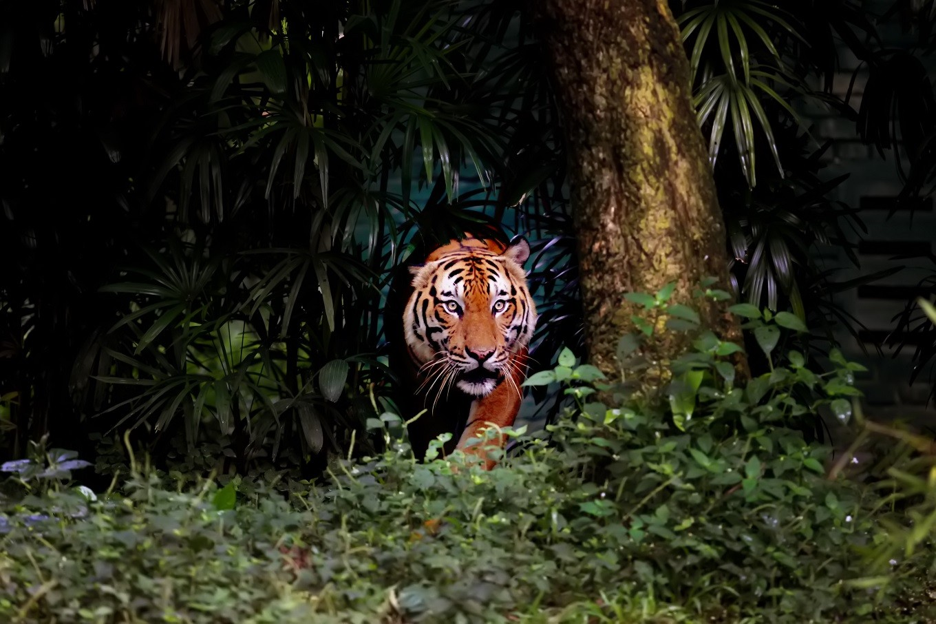 Protecting tiger habitats: Challenges, opportunities