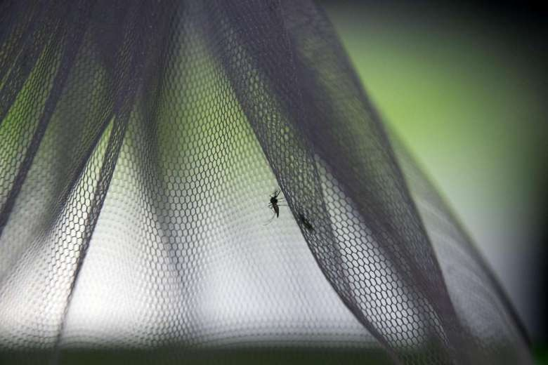 New dengue vaccine to be tested in Singapore trial