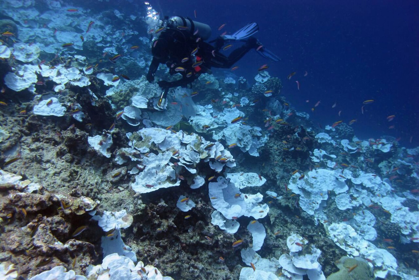 Things to know about coral reefs and their importance