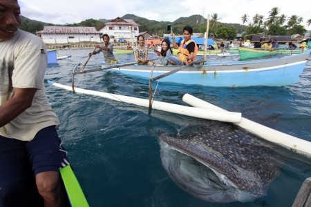 Boat propellers cause of injury to two whale sharks stranded off Bali