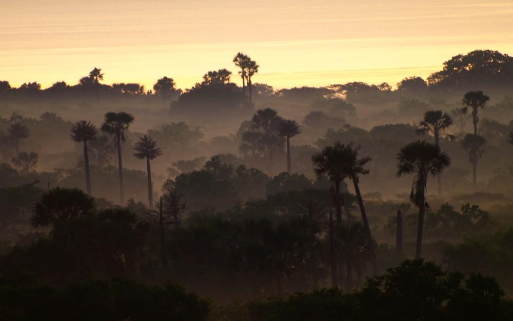 Jawatan Benculuk, an enchanting forest in the outskirts of Banyuwangi