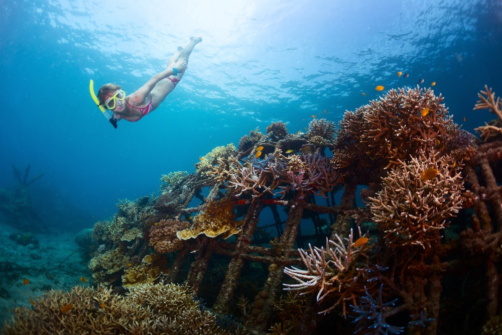 Snorkeling tips without damaging coral reef