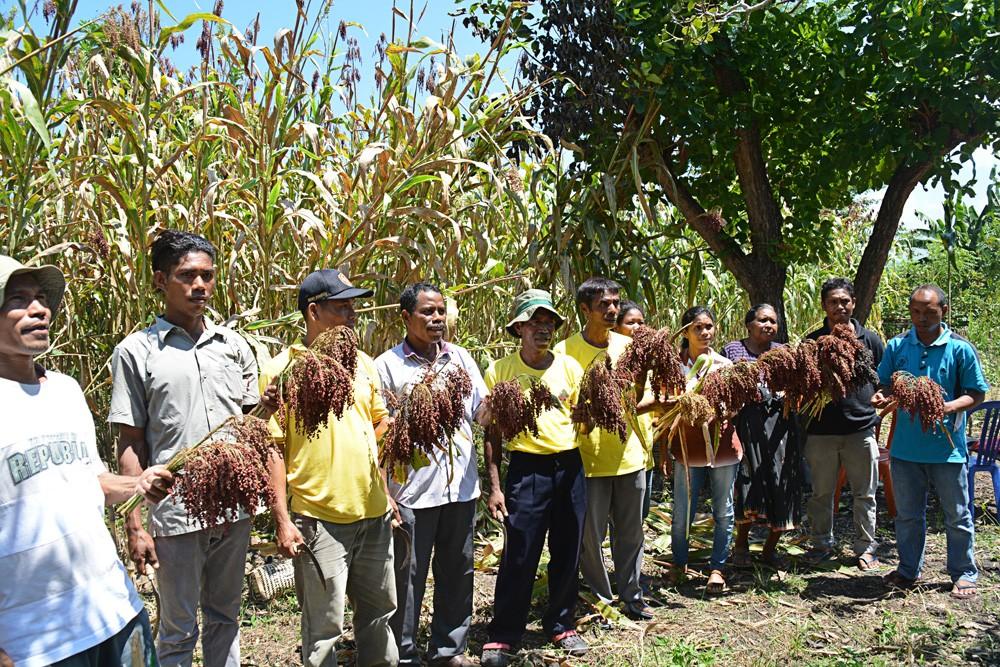 Helena Nanung, a female sorghum farming pioneer from E. Nusa Tenggara