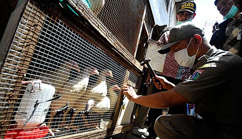 Bird flu rates rise again in Indonesia