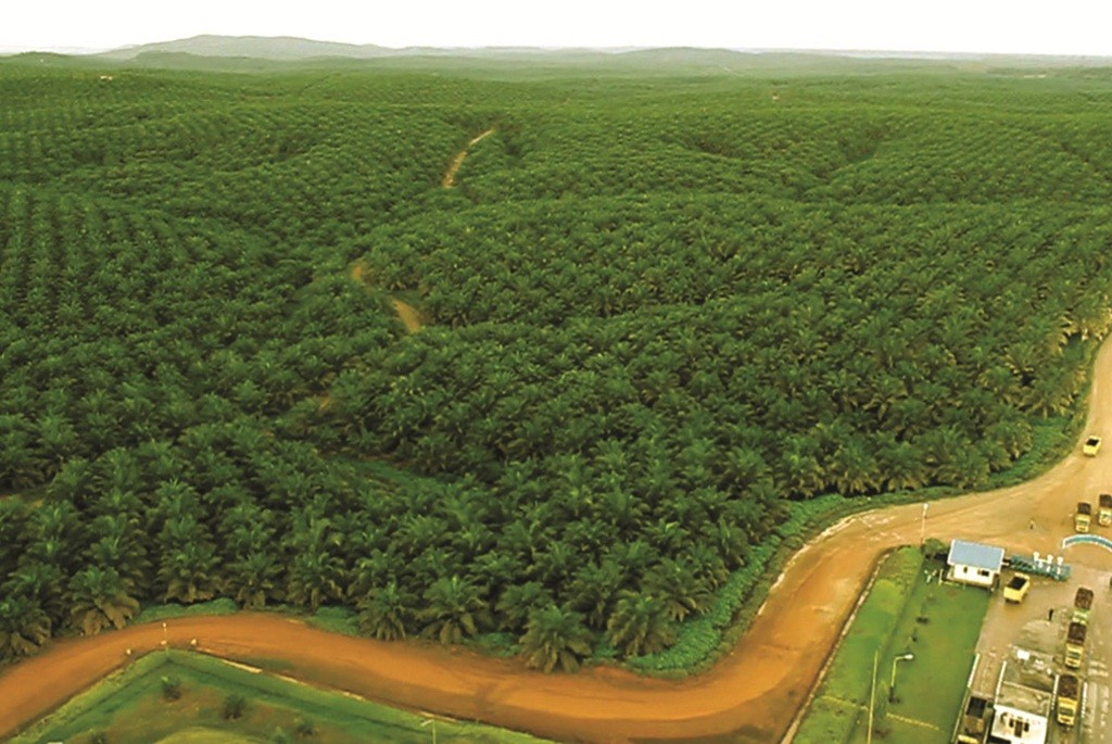 Government urged to revise palm oil bill