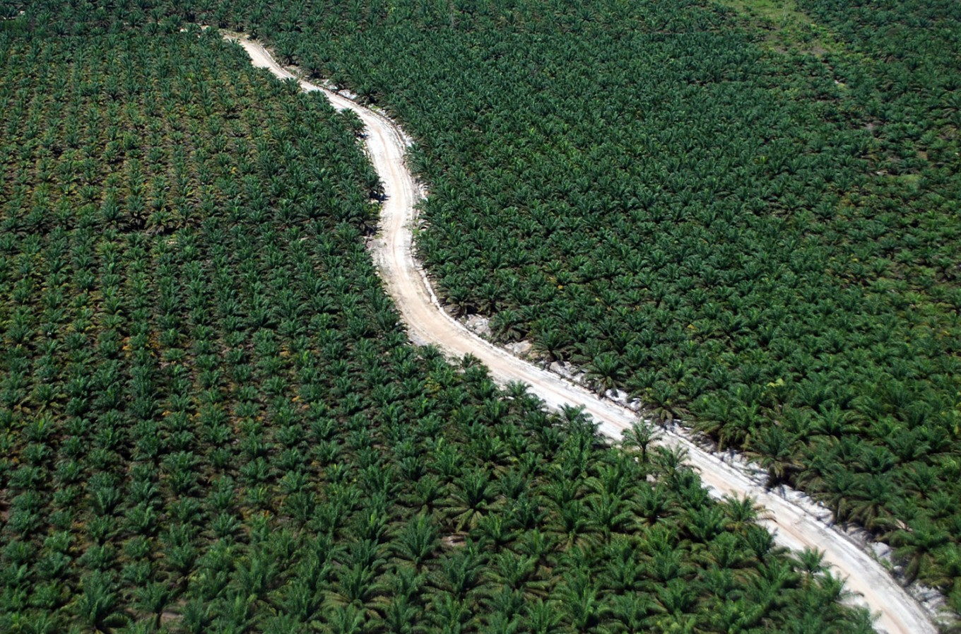 GAPKI urges government to increase palm oil competitiveness