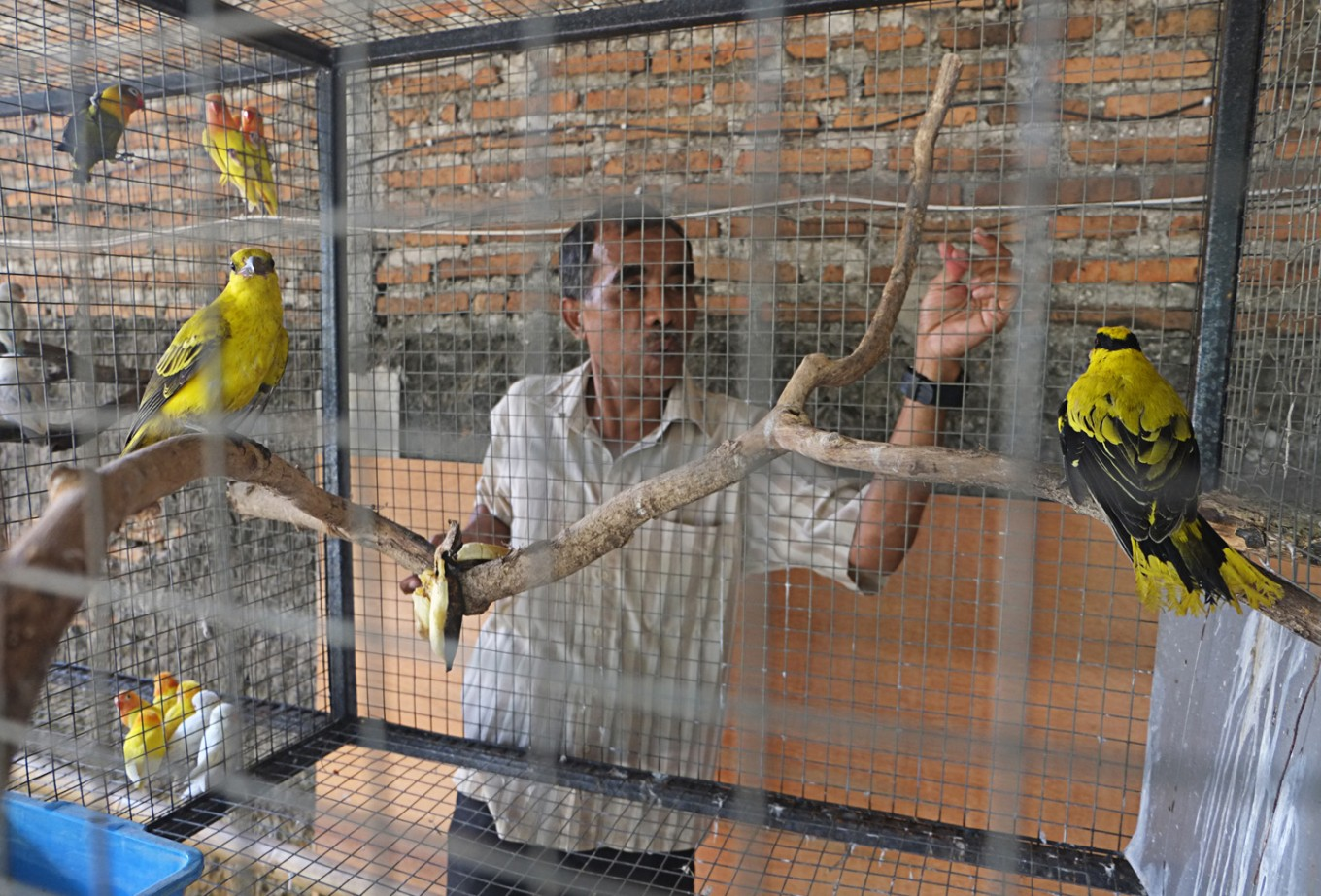 Hundreds of illegal birds confiscated at Surakarta airport