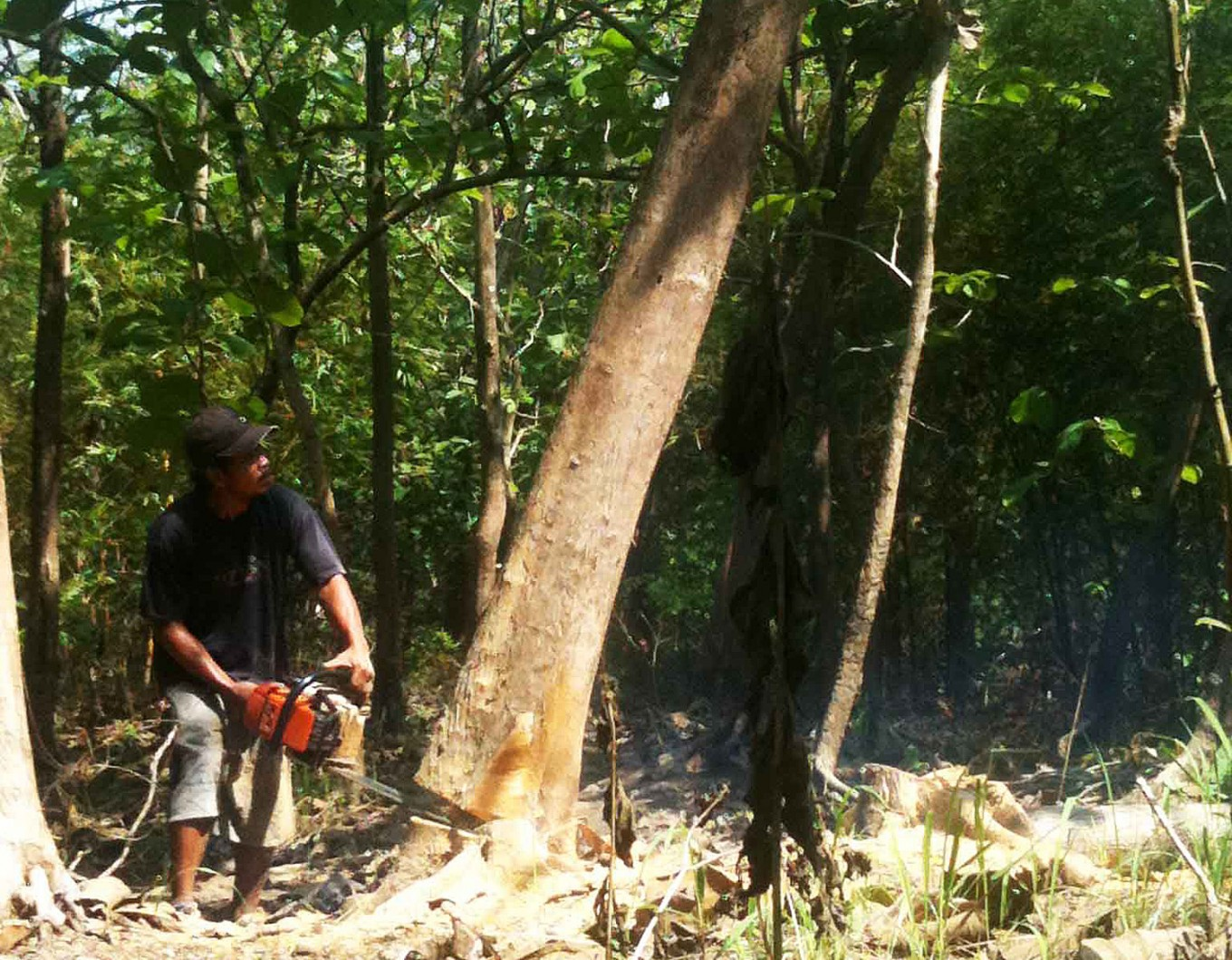 What FLEGT license means for illegal logging