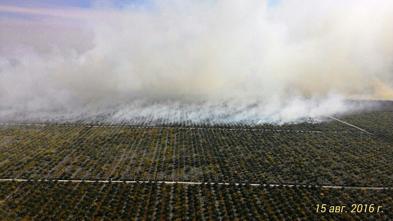 Polluted air from fires starts to affect Riau residents