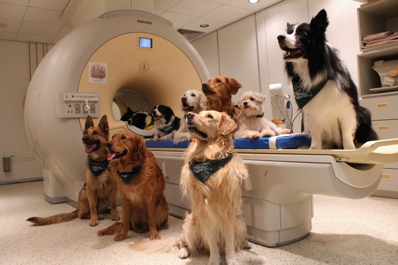 Good boy! Dogs know what you're saying, study suggests