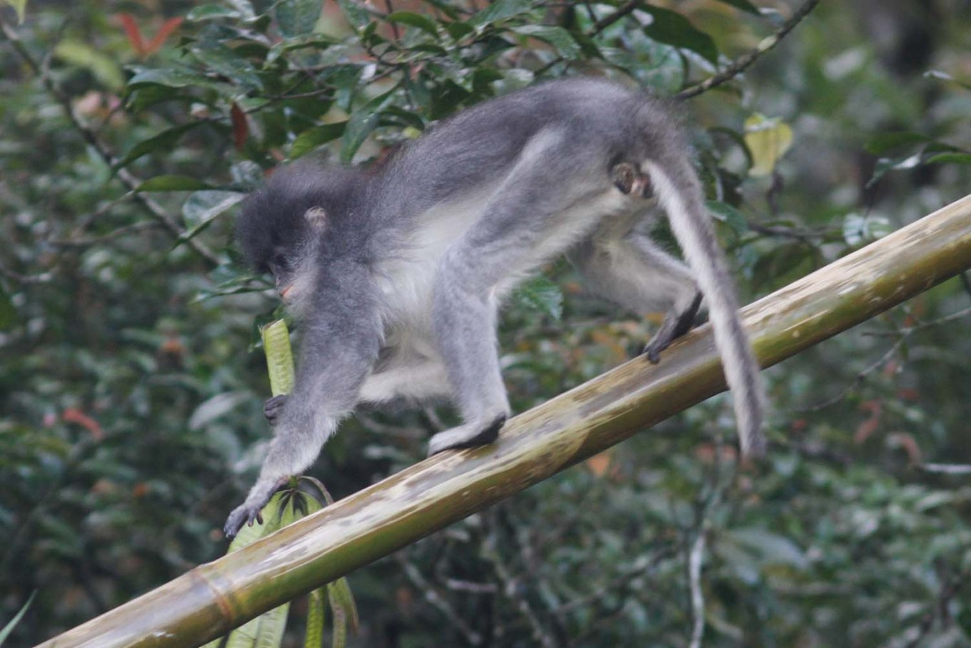 Primates from UK released into the wild in Bandung