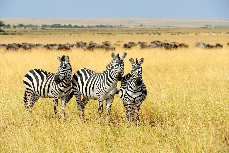 Traversing the wild and wonderful safari capital of the world