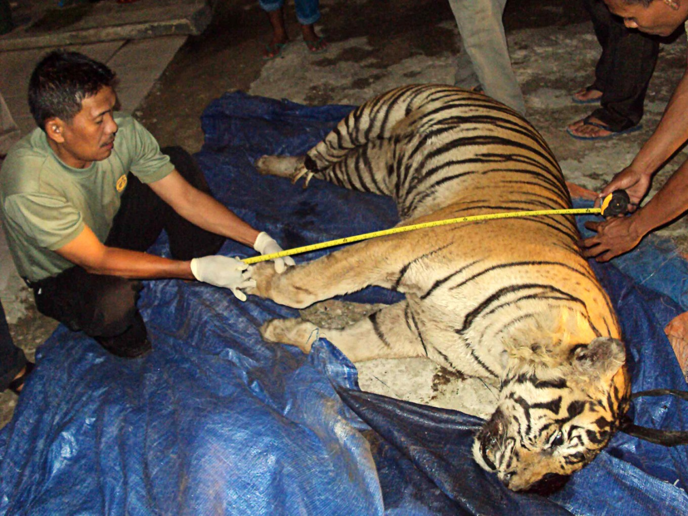 Tiger-skin traders sentenced to 4 years in prison