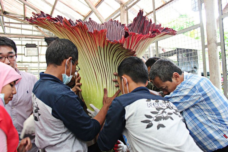 Rafflesia, corpse flowers included in conservation document