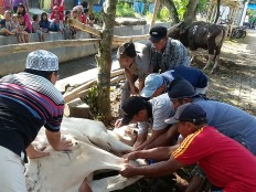 Local people take part in an animal sacrifice in Bojongsari Village of Banyumas regency, Central Java, on Sept. 12. JP/Agus Maryono