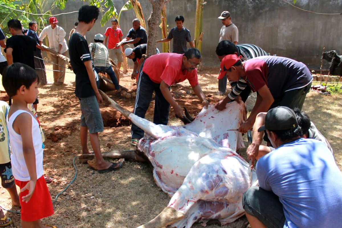 A boy watches a cow being skinned at East Nusa Tenggara Police headquarters during Idul Adha celebrations on Sept. 12. JP/Djemi Amnifu