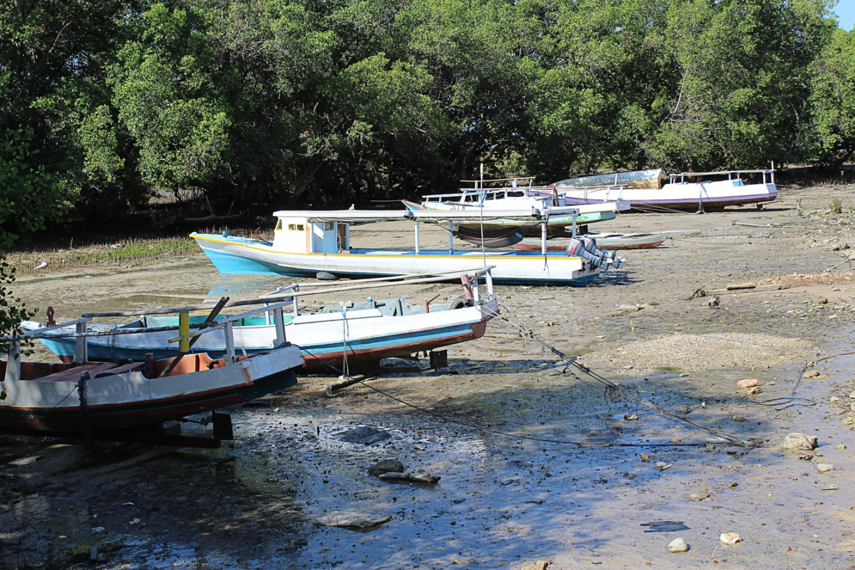 Blast fishing hurts Sawu Sea's marine habitats