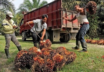 Indonesia's palm oil certification struggling for global recognition