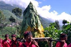 Farmers in Boyolali carry a small pile of tobacco leaves to be symbolically blessed before the harvesting process. JP/Alb Magnus Kus Hendratmo