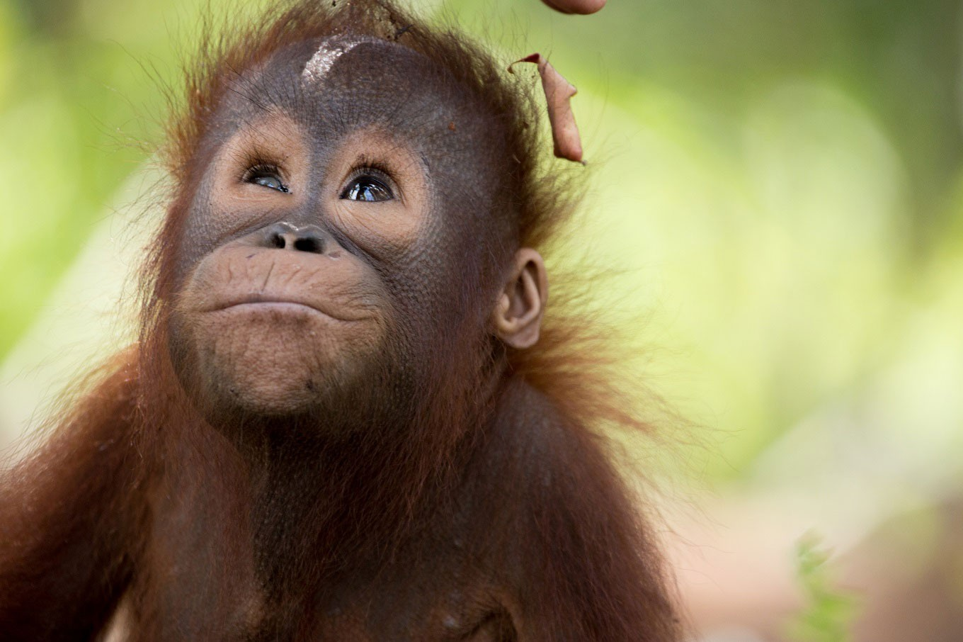 'I am the Forest' exhibition reveals Kalimantan's magnificent wildlife