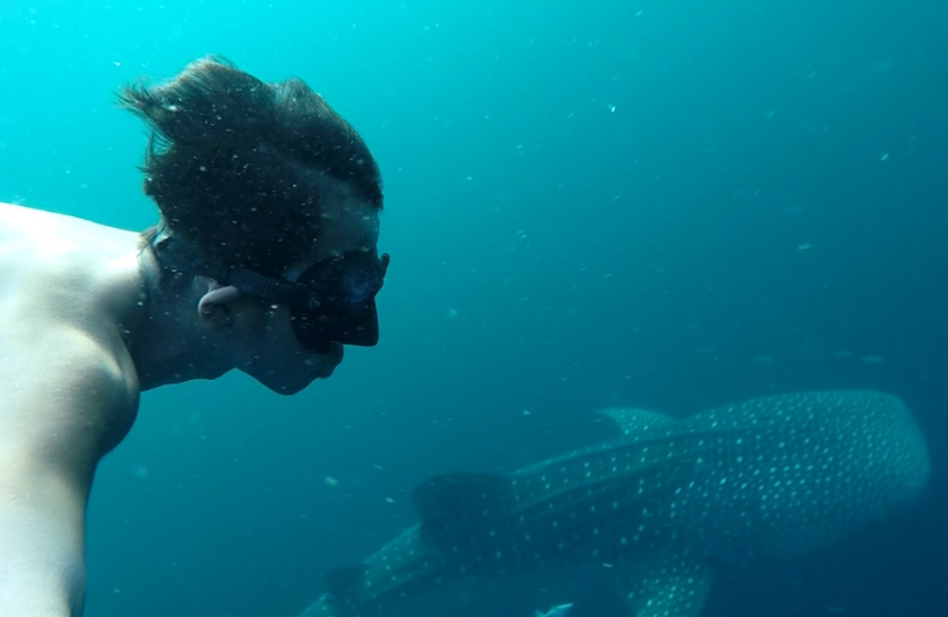 Student fulfills dream of diving with whale sharks