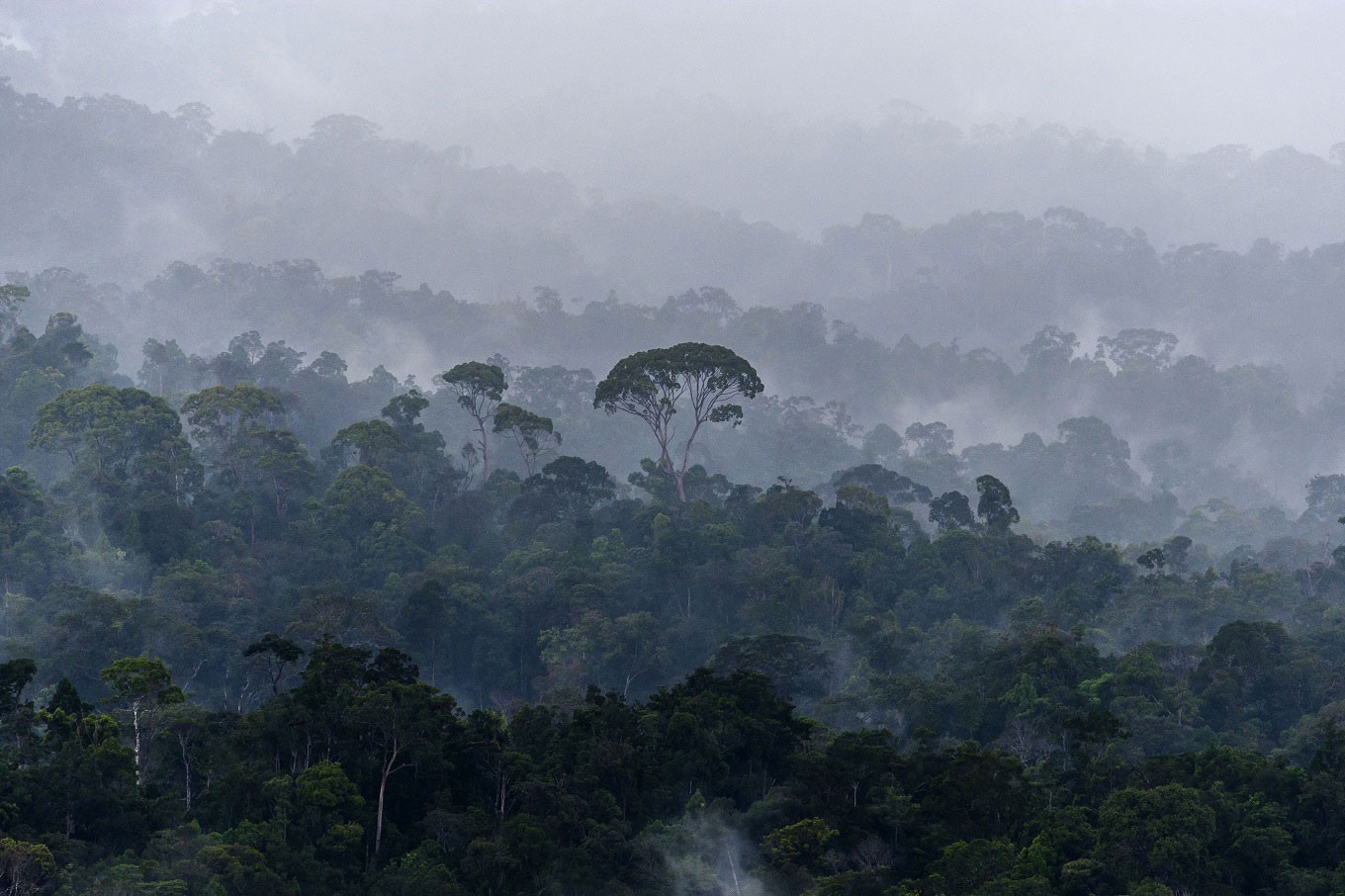 Philanthropic groups siphon US$459 million to protect forests, indigenous peoples