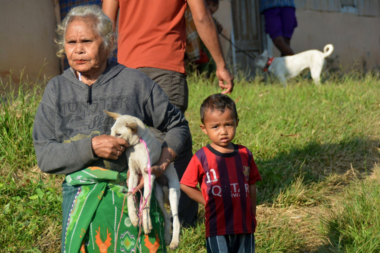 Vaccination, a humane way to control rabies on Flores, Lembata
