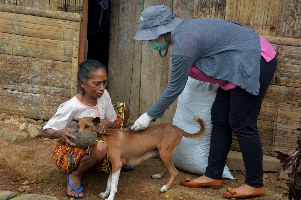 A vet vaccinates a dog in Kampung Melo on Aug. 31. Dog vaccination is being optimized to control the spread of rabies, especially on Flores and Lembata. JP/Markus Makur