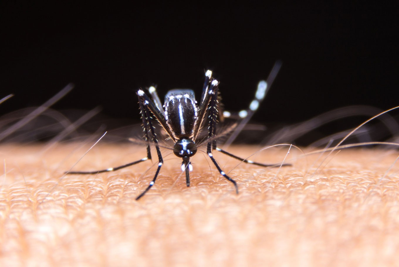 Study suggests dengue may provide some immunity against COVID-19