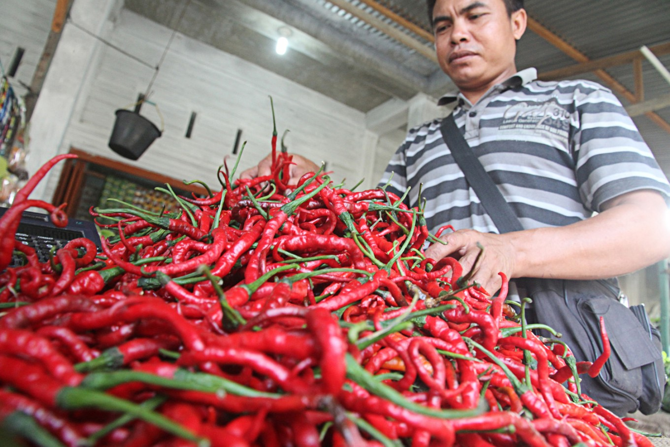 Govt ensures stable chili supply, price