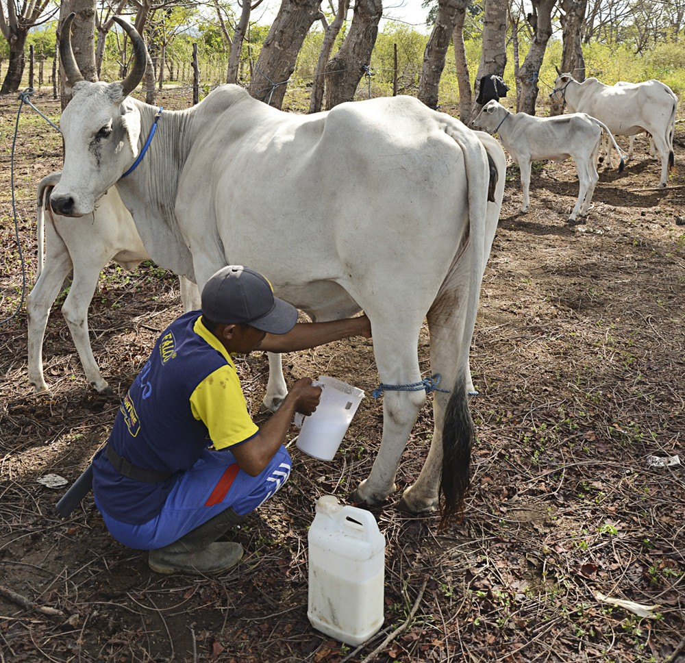 Local breeders welcome court decision on cattle and meat imports