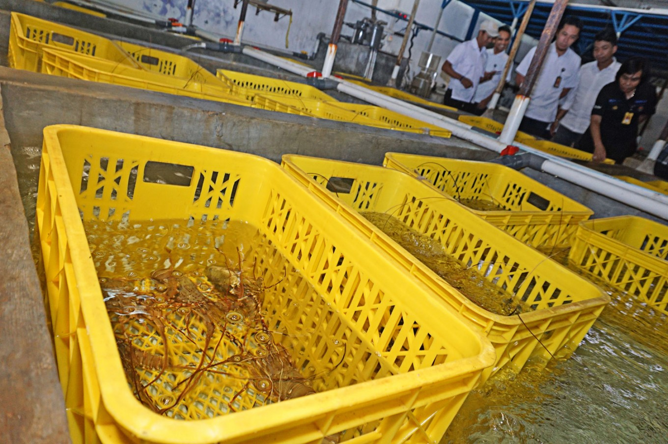 Attempt to smuggle Rp 1.6b of lobster seeds foiled