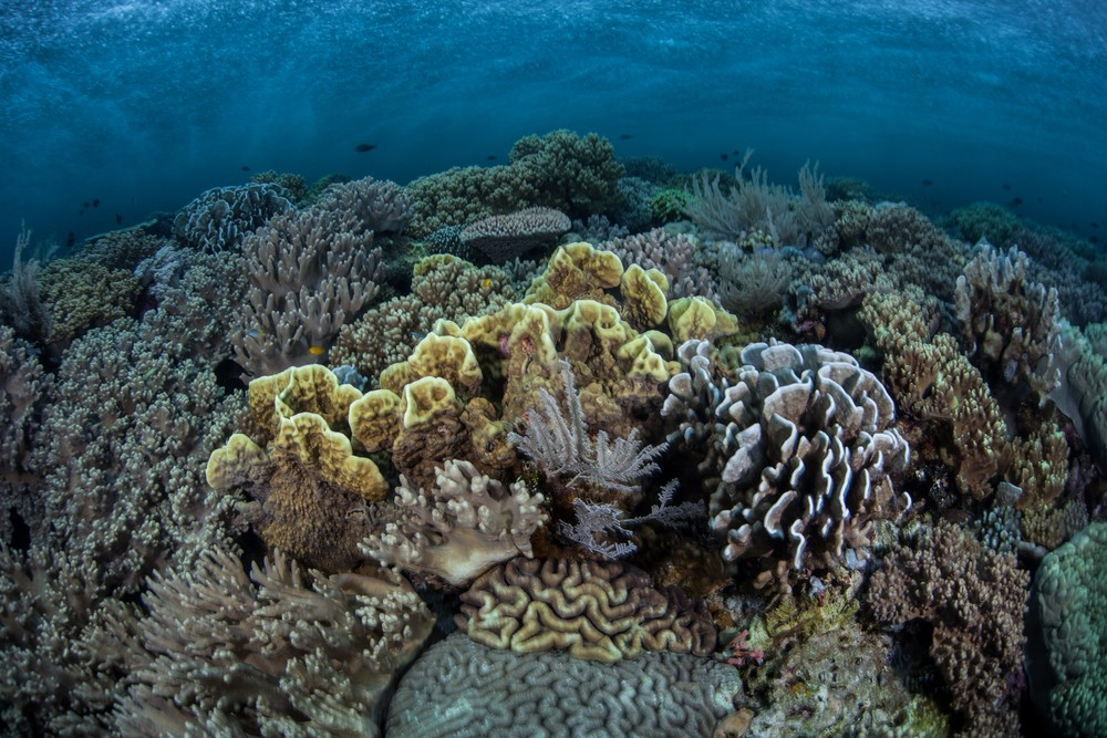 a study of coral reefs Studies on coral reefs are actively integrating these data streams at multiple  levels, from the symbiotic habitat of the coral holobiont to microbially mediated.