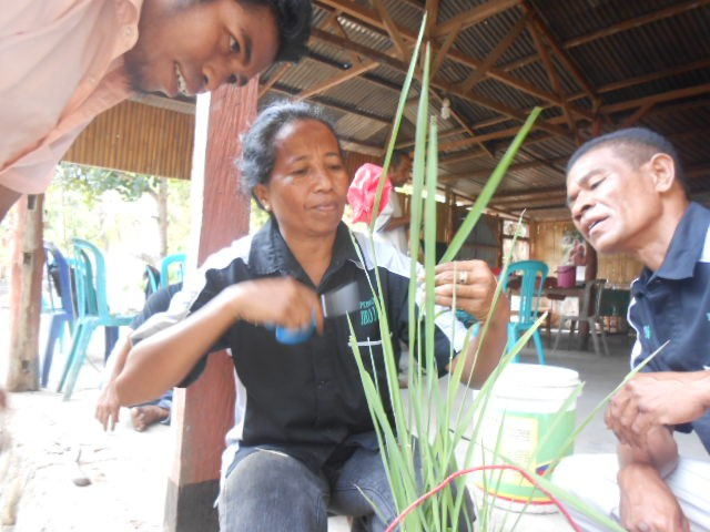 East Nusa Tenggara farmer among women 'food heroes'