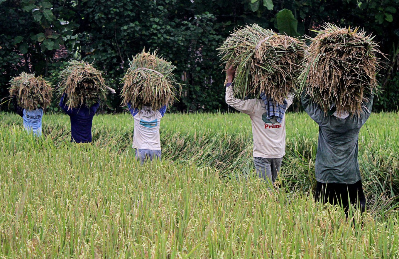 Government to buy all paddy produced by farmers: Minister