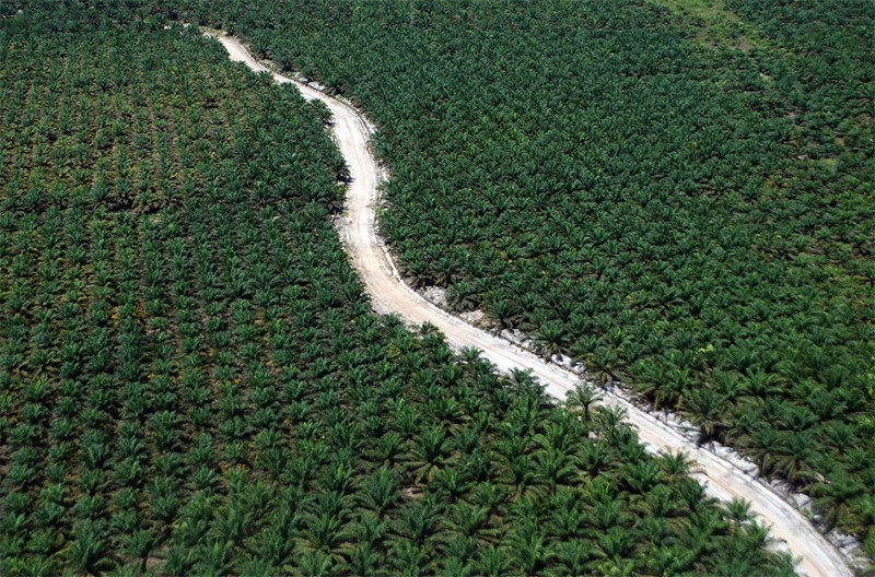 Oil palms need one-ninth of land used by other vegetable oil crops
