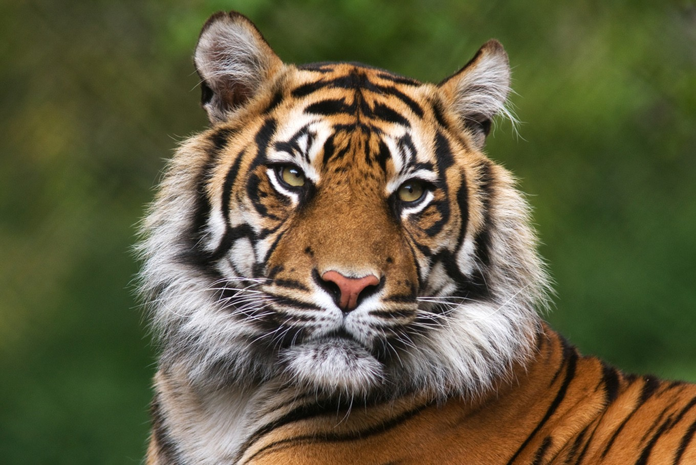 Discovery goes beyond lens to save wild tigers